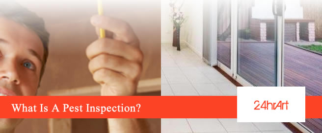 What Is A Pest Inspection